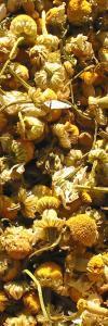 Kamillenblüten ganz Bio
